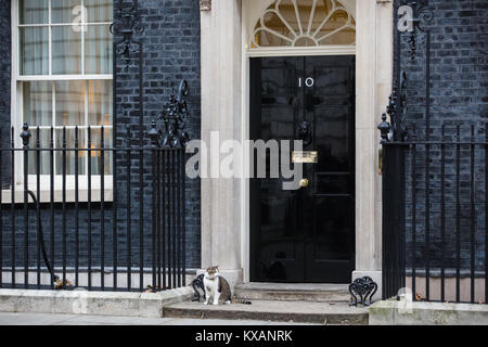 London, UK. 8th January, 2018. Larry, the Downing Street cat, Prime Minister Theresa May sits outside the door to - Stock Photo