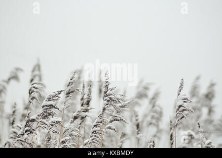 a winter day in Hamburg - Stock Photo