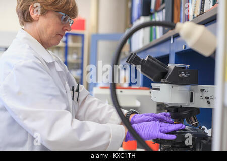 scientific or medical instrument lab chemist placing a sample slide on a microscope stage stock photo