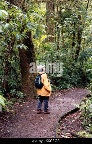 Asian woman walking in yellow waterproof coat in the Monteverde Cloud Forest Reserve - Stock Photo