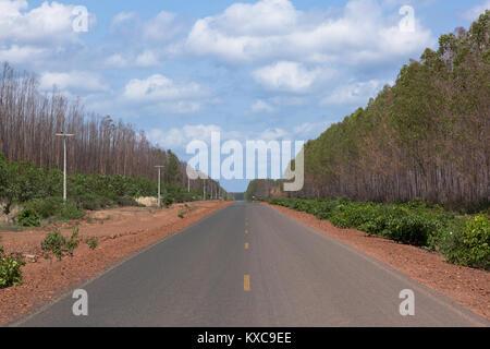 Eucalyptus plantation replaces Cerrado in Piaui - Stock Photo
