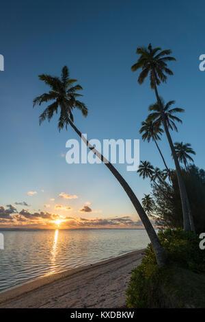 Palm trees on the sandy beach at sunset, Rarotonga, Cook Islands - Stock Photo