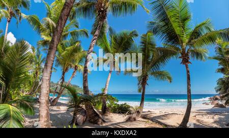 Beautiful palm trees on tropical island Jamaica. - Stock Photo