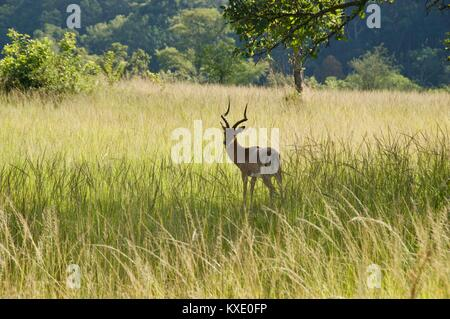 South African Safari and Nature parks - Stock Photo