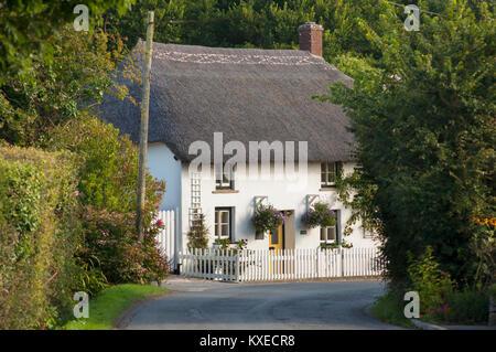 A pretty thatched cottage, Gunwalloe, Cornwall, UK - John Gollop