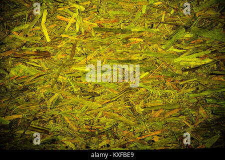Green abstract organic texture background with messy wooden pattern - Stock Photo