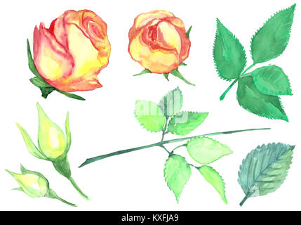 Collection of buds of roses with leaves. Watercolor set of flowers and leaves. Isolated pattern on a white background. - Stock Photo