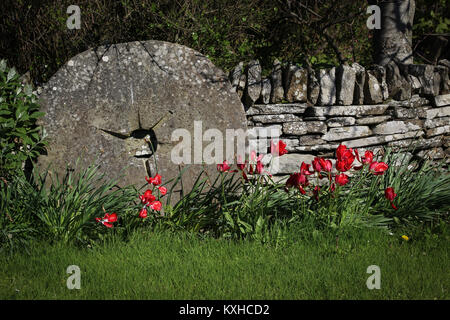 Old granite millstone resting against a dry stone wall in a garden, with red tulips, green grass on a sunny day; - Stock Photo
