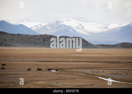 Mongolian landscape snowy mountains snow winter wild horses drinking from river Mongolia - Stock Photo