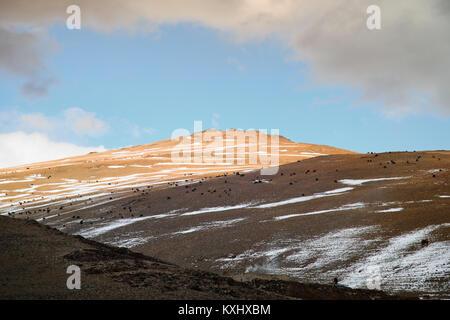 Mongolian landscape snowy mountains snow winter cloudy goat herd Mongolia - Stock Photo