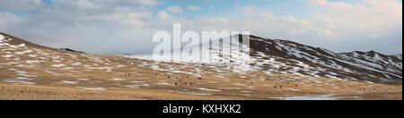 Mongolian landscape snowy mountains snow winter wild horses herd Mongolia panorama - Stock Photo