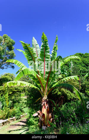 Color outdoor nature image of a red green palm in a garden / park under a blue sky taken on a bright sunny clear - Stock Photo