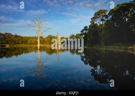 Surreal landscape at Clumber Park, Nottinghamshire. Dead tree in lake. - Stock Photo