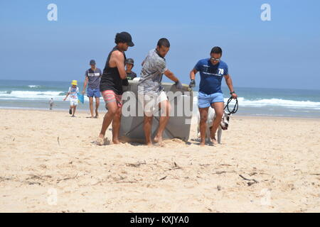 Strong men removing large Plastic Litter from the Beach during a Beach Clean Up in Portugal - Stock Photo