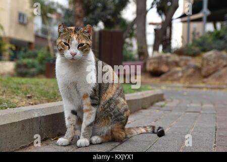 stray cat with my new sigma - Stock Photo