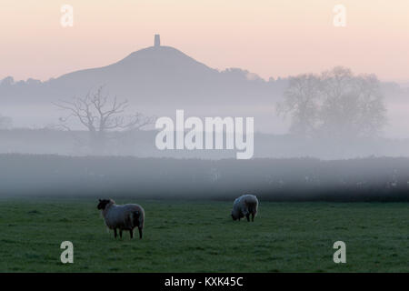 Glastonbury Tor in dawn mist, Glastonbury, Somerset, England, United Kingdom, Europe - Stock Photo