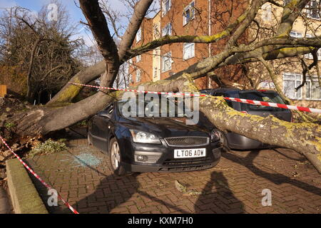Giant tree falls onto car in Neasden, London, England - Stock Photo