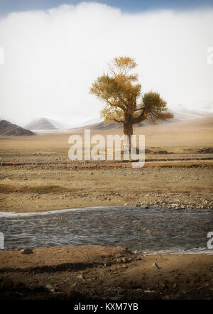 Mongolian yellow leafs lonely tree landscape snowy mountains snow winter cloudy Mongolia - Stock Photo