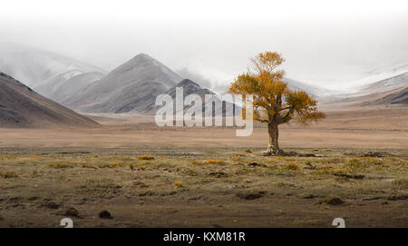Mongolian lonely tree yellow leafs landscape snowy mountains snow winter cloudy Mongolia - Stock Photo