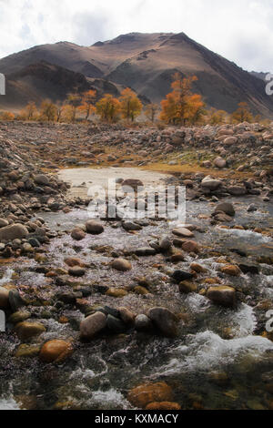 River Mongolia yellow leafs fall stream of water landscape - Stock Photo