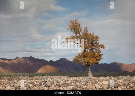 Mongolia yellow leafs tree fall landscape river bank - Stock Photo