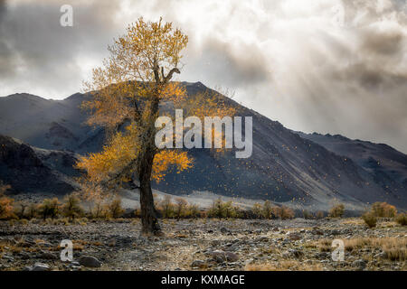 Mongolia yellow leafs tree fall landscape river bank sun rays - Stock Photo