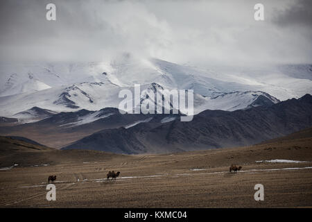 Mongolia winter lake snowy mountains cloudy camels grasslands steppes Mongolian - Stock Photo