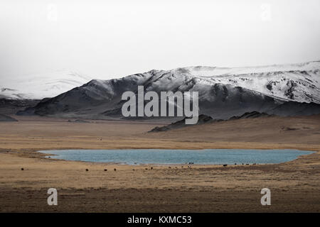Mongolia winter lake snowy mountains cloudy cattle cows grazing grasslands steppes foggy Mongolian - Stock Photo