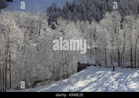 Snow covered trees along riverside, Le Grand Bornand, Haute Savoie, French Alps. - Stock Photo