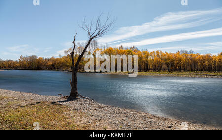 Dead tree standing river bank yellow leafs fall ND filter long exposure - Stock Photo