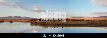 Sunset horse crossing river Mongolia landscape plains steppes goats herd ger - Stock Photo