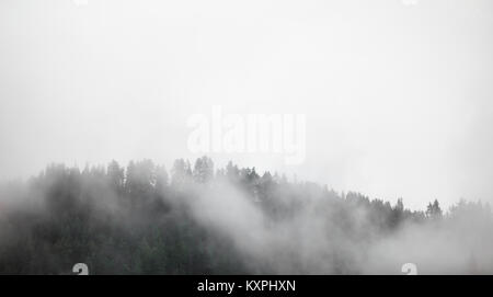 Dense fog and clouds covering forest treeline in Norway. - Stock Photo
