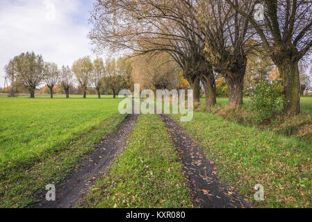 Willow trees near Zelazowa Wola village in Poland, birthplace of Polish composer Frederic Chopin - Stock Photo