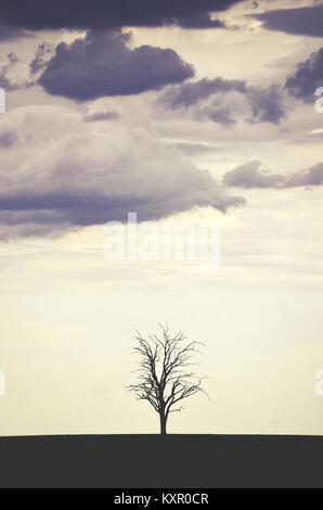 Single leafless dead tree in a field silhouetted against a stormy grey sky - Stock Photo