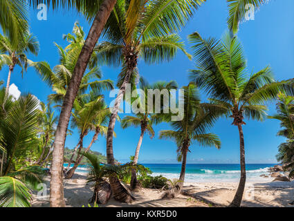 Coconut palm trees on tropical beach in Seychelles. - Stock Photo