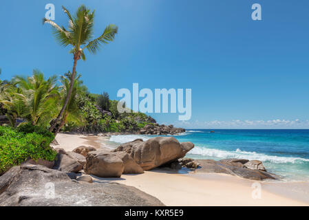 Seychelles beach with palms and beautiful stones. - Stock Photo
