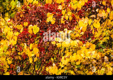 Wet Fall Leaves _ Simsbury, Connecticut, USA - Stock Photo