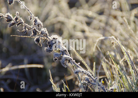 Winter frozen morning in typical season view. A hoarfrost on meadow. - Stock Photo