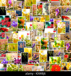 Flower collage. spring background, floral montage from several images - Stock Photo