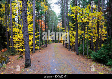 A beautiful road through the fall forest - Stock Photo