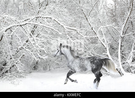 Andalusian thoroughbred gray horse in winter woods in motion on the nature background - Stock Photo