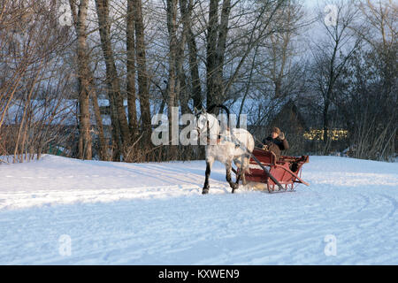 The horse harnessed in sledge, goes on the snow road in Russia - Stock Photo