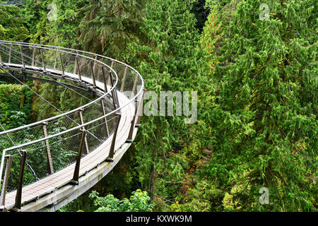 Capilano Cliff Walk through rainforest the popular suspended walkways juts out from the granite cliff face 230 metres - Stock Photo