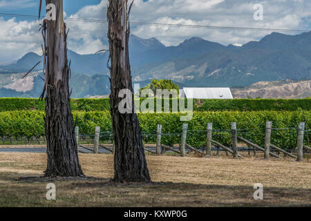vineyards of Marlborough, New Zealand - Stock Photo