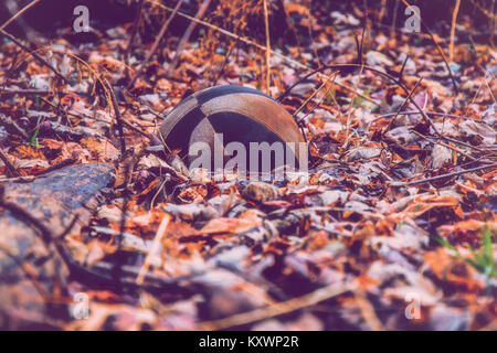 Wandering through the woods and saw this old basketball lying in the leaves on the forest floor. - Stock Photo