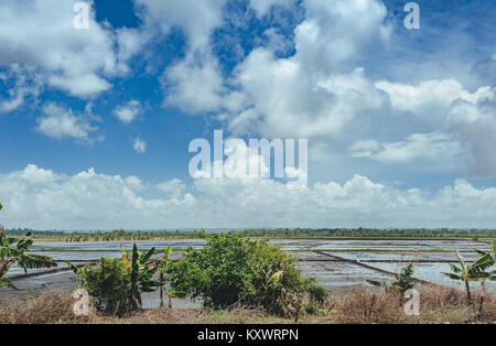 Rice fields filled with water and Palm trees. Palm trees planted along a rural road on rice fields in the countryside. - Stock Photo