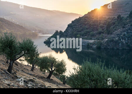 The River Douro at sunset between Folgosa and Pinhao. In the Alto Douro wine region, Northern Portugal - Stock Photo