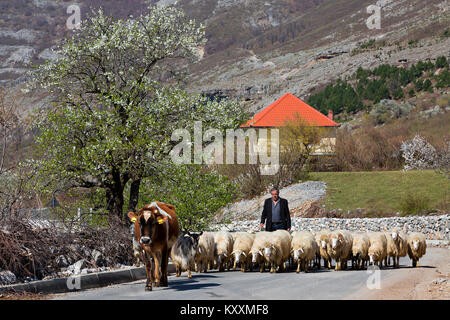 Herd of sheep on the road in Albania. - Stock Photo