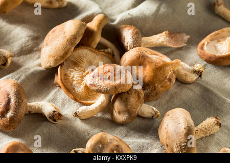 Healthy Organic Fresh Shiitake Mushrooms Ready to Cook - Stock Photo