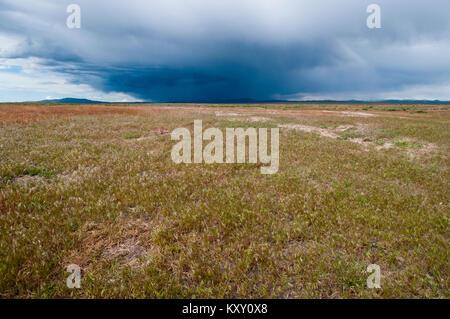 Cheatgrass monoculture replacing former big sagebrush steppe habitat in southwestern Idaho - Stock Photo